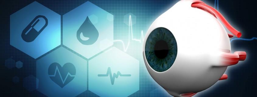 Human Eye Dissection Anatomy